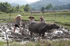 131127 Luang Prabang005