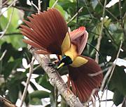 Västra Papua